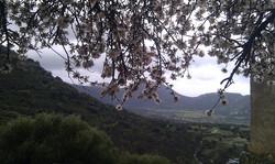 vue-pigna-fleurs