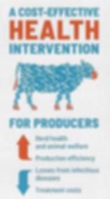 Vaccines cattle.jpg