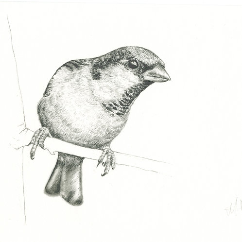 Little Sparrow, original artwork