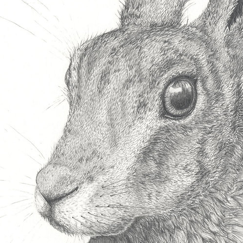 Hare, limited edition fine art print