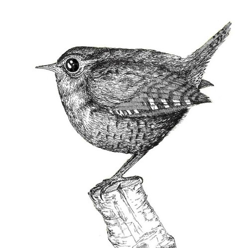 The Castleton Wren, risograph print