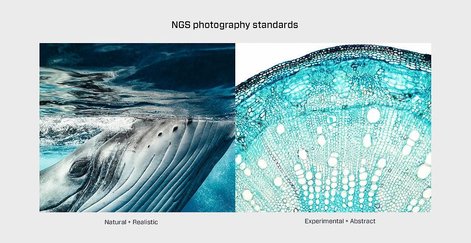 NGS_45.jpg