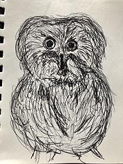 owl.HEIC