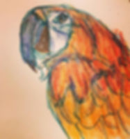 Drawing of the day #parrots #parrotsofin