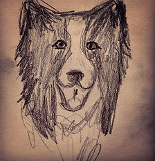 border collie head.JPG