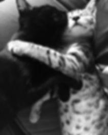 kitten hugs.JPG