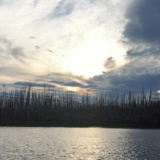 Burnt forest (British Columbia)