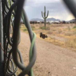 Sonoran Desert of Mexico