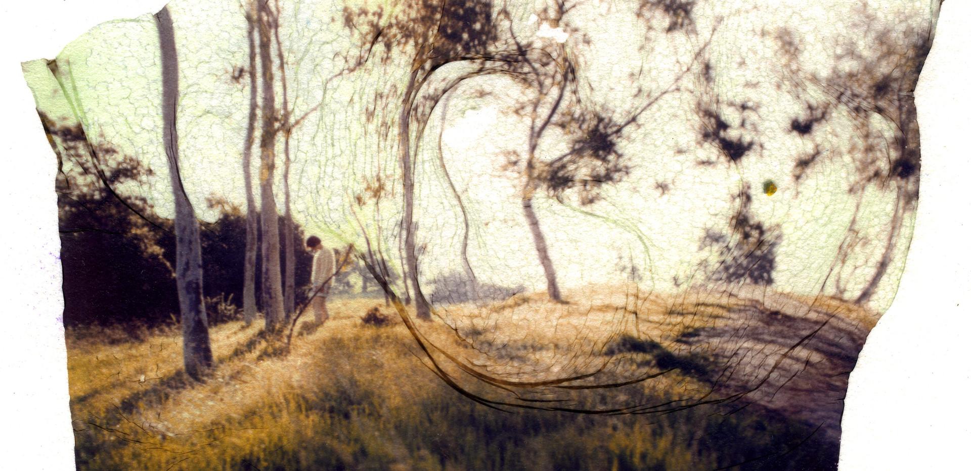Emulsion Tran - Trees001.jpg