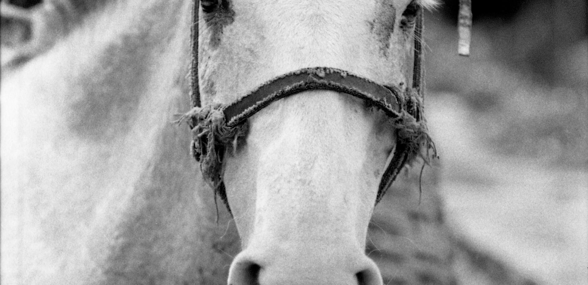 Oro Preto Horse.jpg