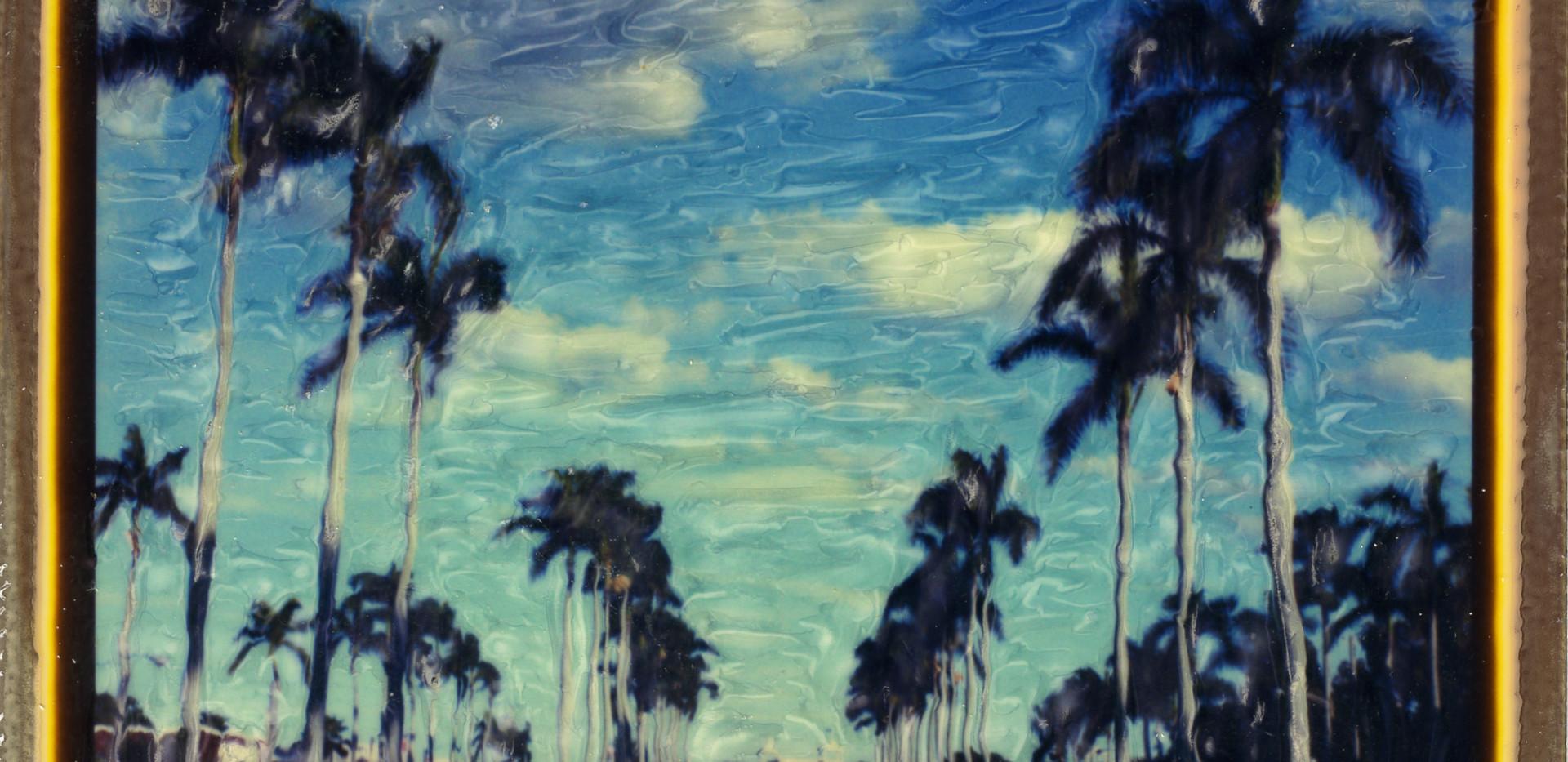 SX-70 Palm Beach Palms001.jpg