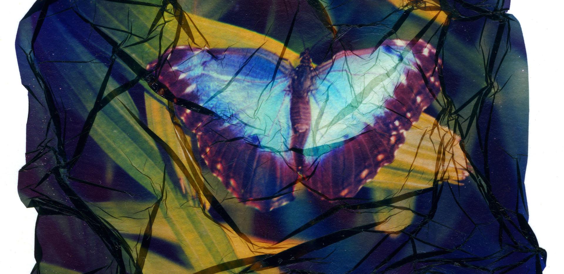 Polrd Lift - Butterfly001.jpg