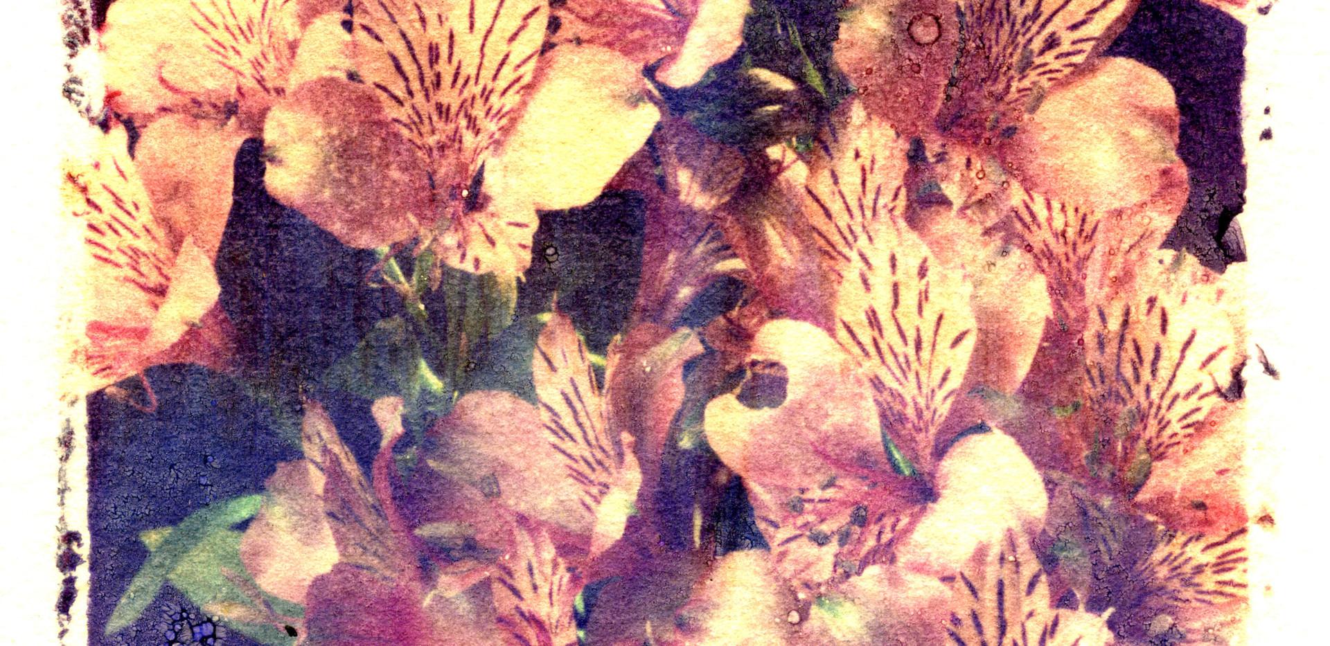 Emulsion Tran -flowers.jpg