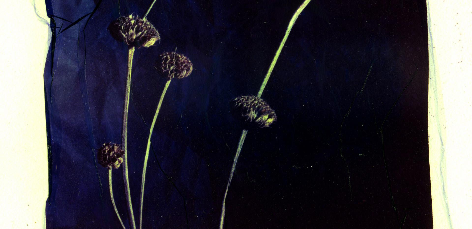 Polrd Lift - Weed001.jpg