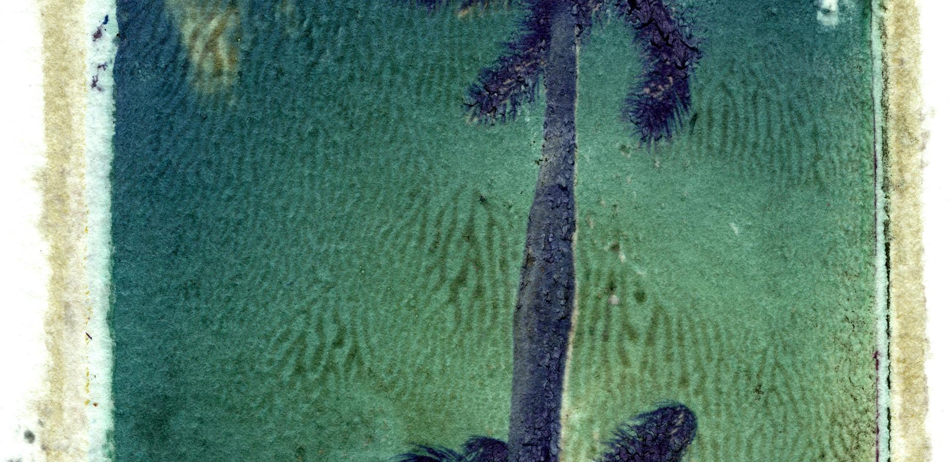 Emulsion Tran -Palms001.jpg