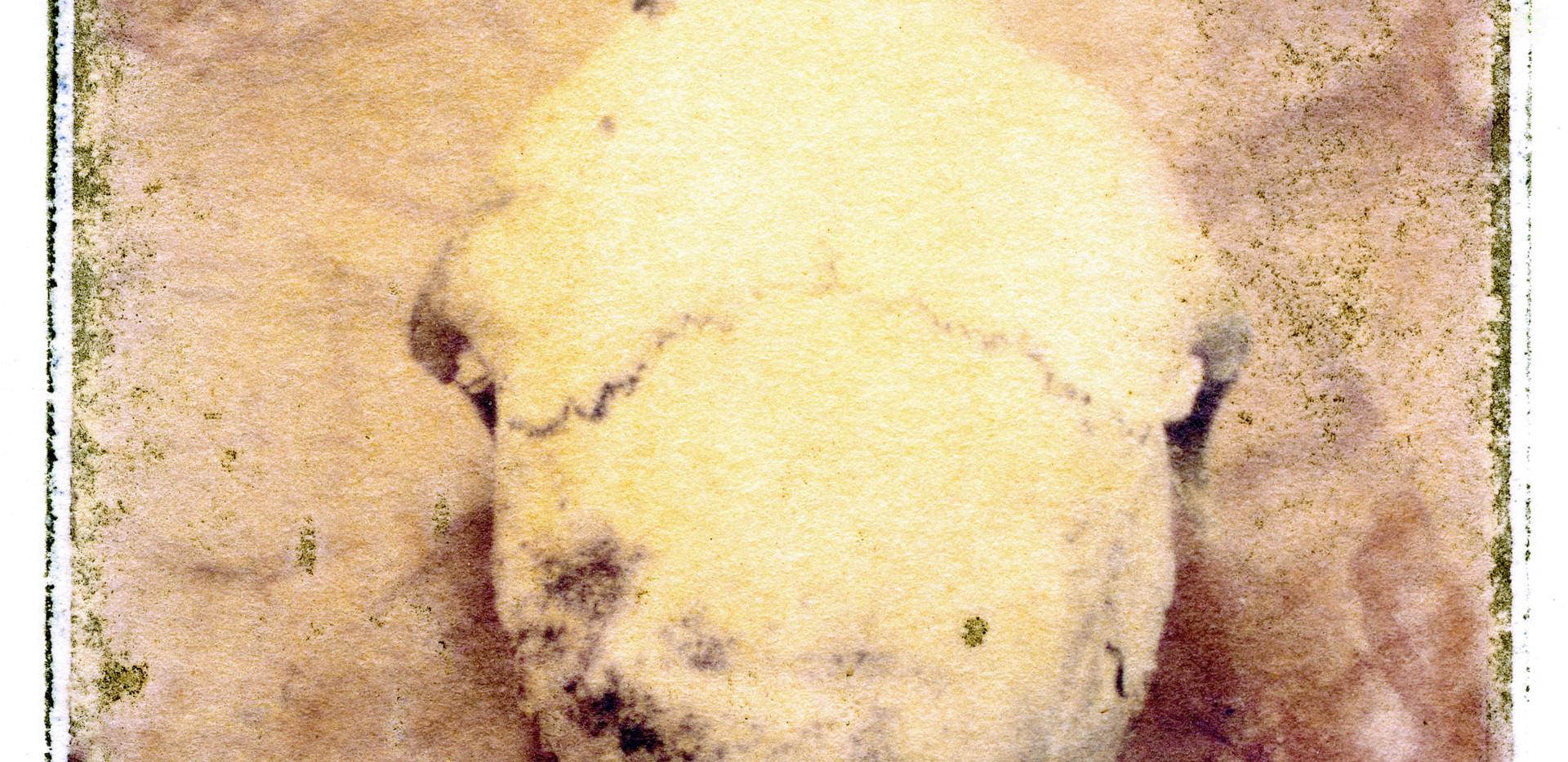 Emulsion Tran - Skull.jpg
