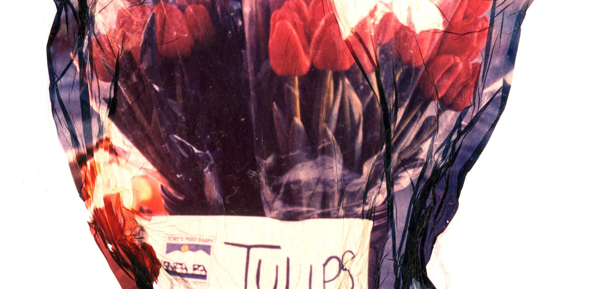 Polrd Lift - Tulips001.jpg