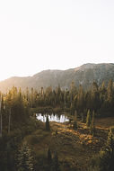 Wild Pond
