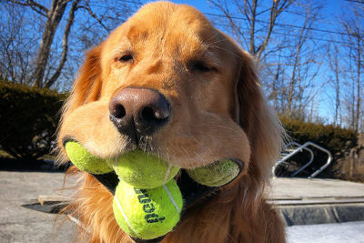 Balls-Dog.jpg