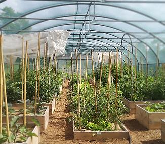 Trattoria Antica Cartiera serra verdure
