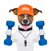 Fitness dog.png