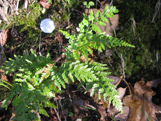 Flourishing Ferns
