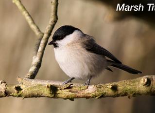New bird for Sustead Common