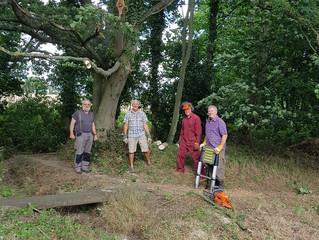 Storm brings branch down on Surveyor's Allotment
