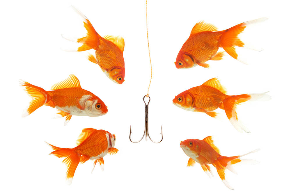 Goldfish lured by fishhook, employees hooked by phishing.