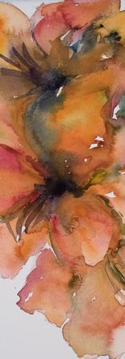 Peach Amaryllis