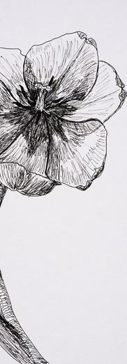 Open Tulip (pen)