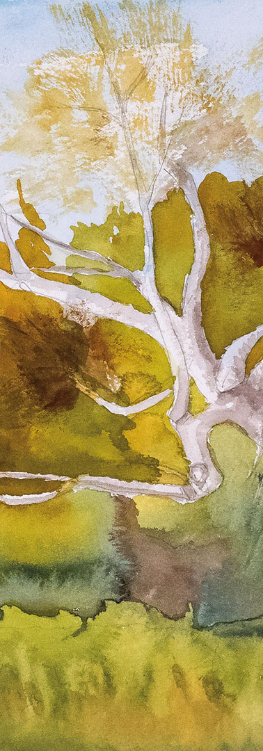Leaning Birch Tree, Fall
