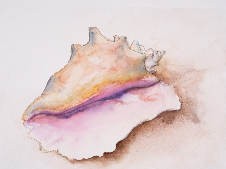 Conch Shell #2
