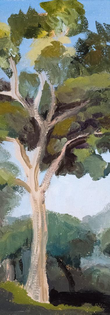Eucalyptus Tree (vertical)