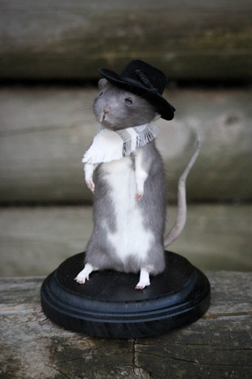 Rat Taxidermy Class - Paid in full