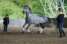 Ферма Экзархо, конный клуб, катание на лошадях, конные прогулки, обучение верховой езде, экскурсии