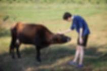 Ферма Экзархо, Инга Экзархо, конный клуб, конные прогулки, молочная продукция, фермерская продукция, фермерский ресторан, вегетарианские сыры, конные прогулки в горы