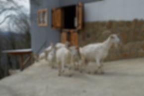 Ферма Экзархо, козоводство, молочная продукция, фермерская продукция