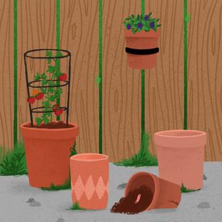 Plant - Pots.jpg
