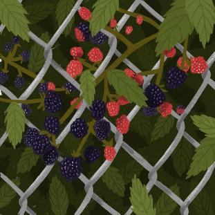 Plant - Blackberries.jpg