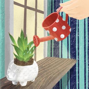 Plant - Succulent.jpg