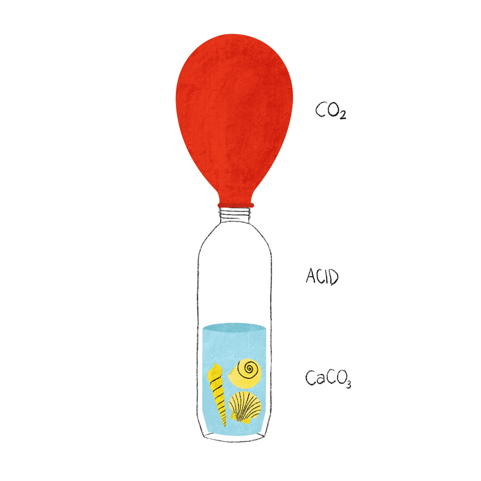 EGS_28 - Shell and Vinegar Balloon.jpg