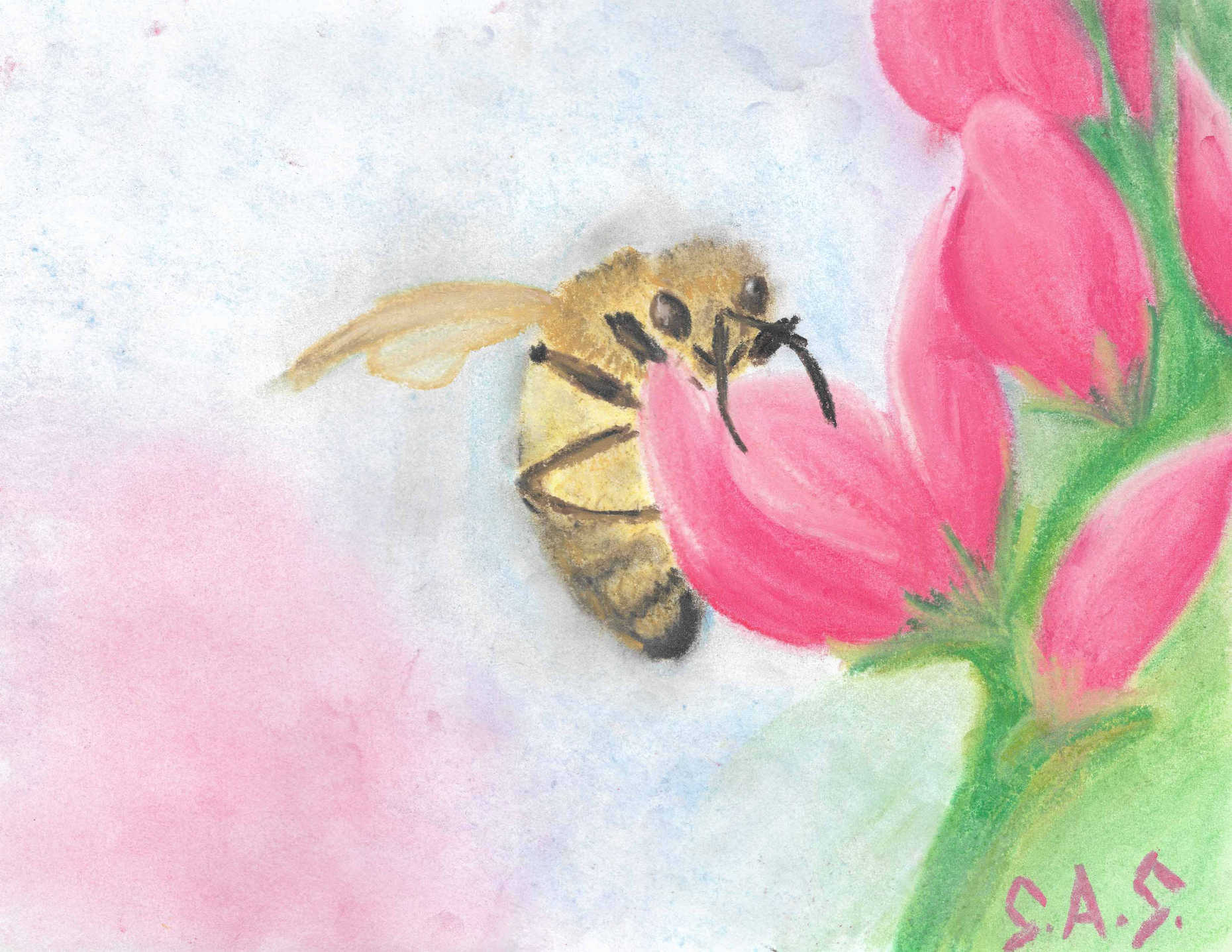 Bee Bold in chalk pastel - Print/Original