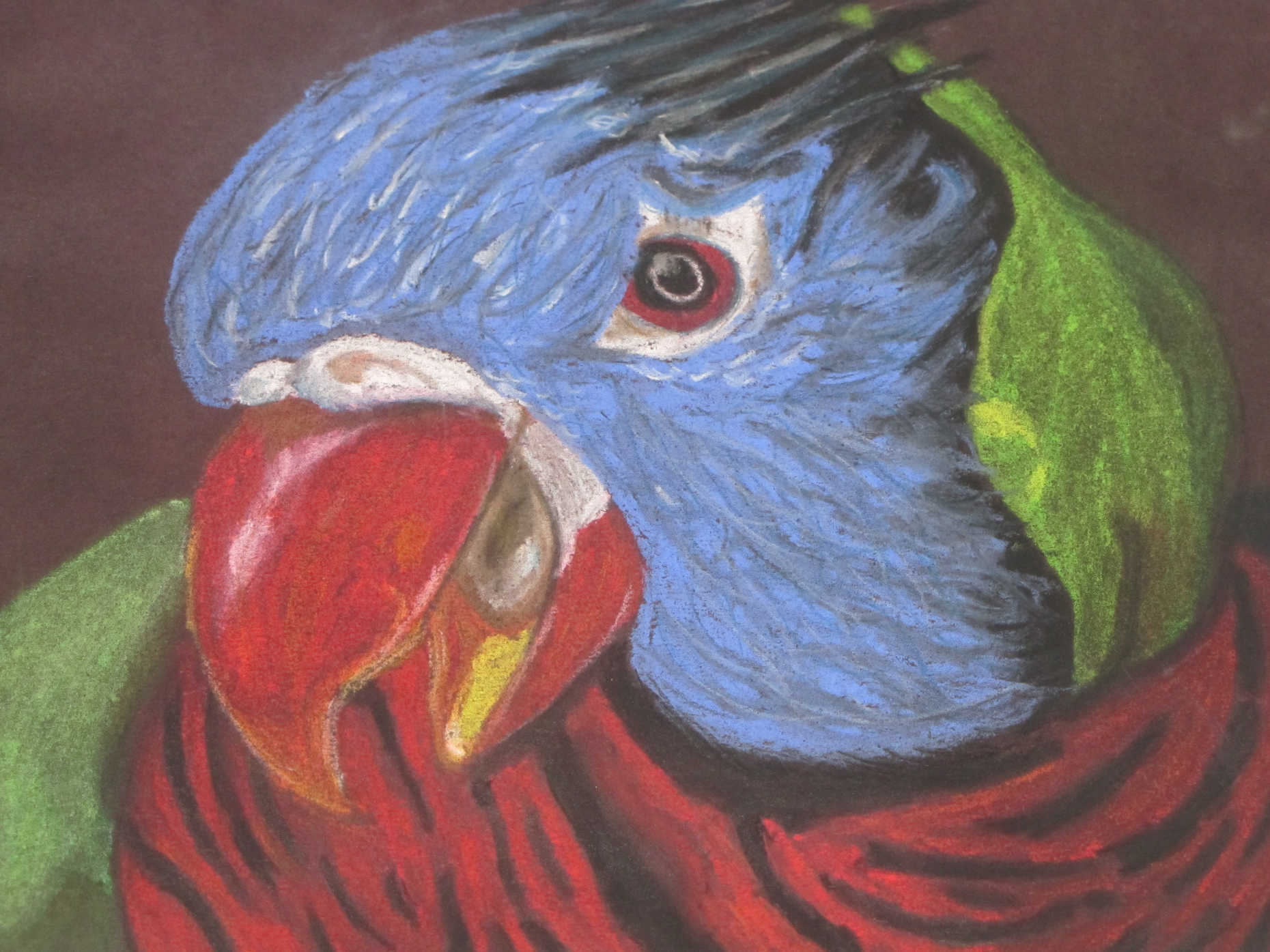 Multi-colored parrot in chalk pastel - Print