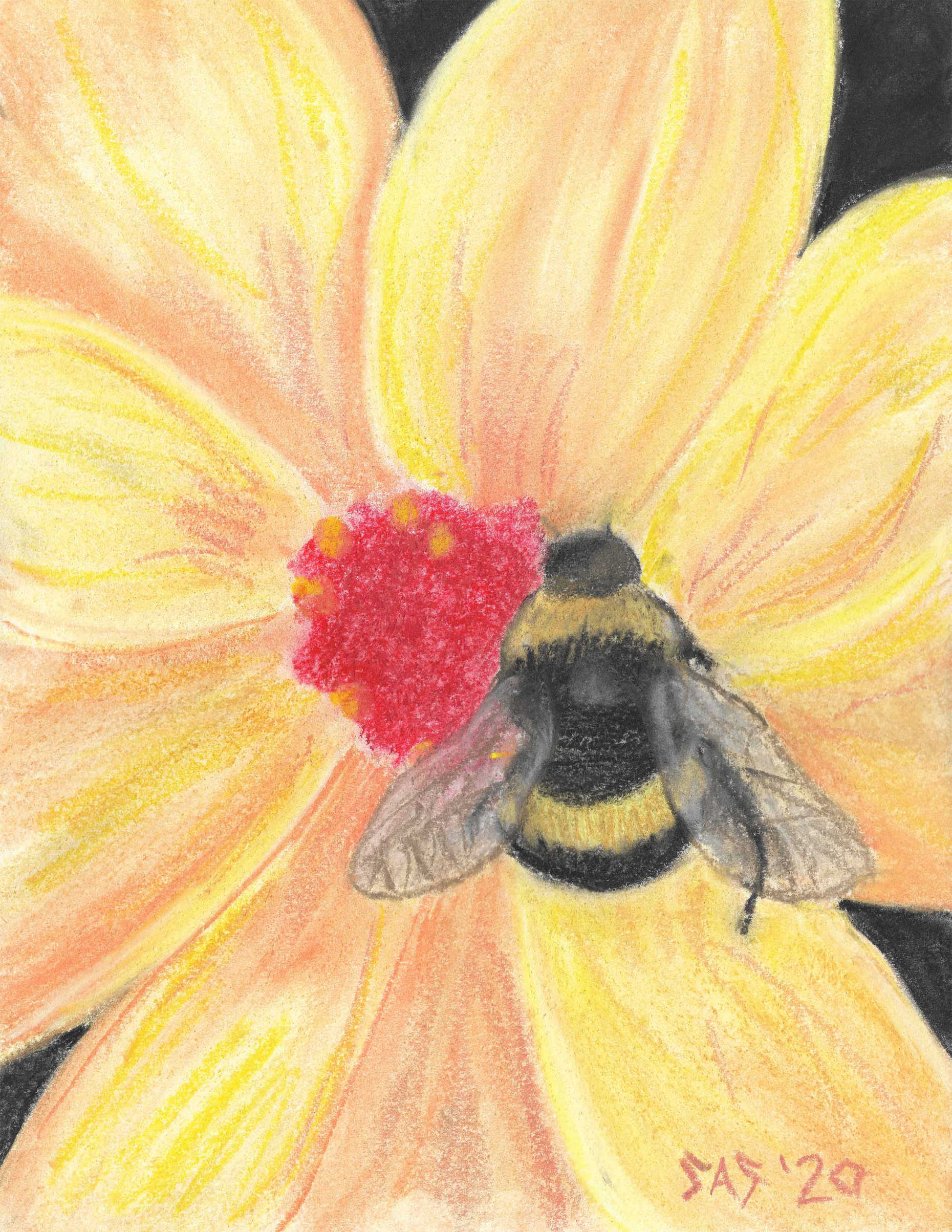 Bee Bright in chalk pastel - Print/Original