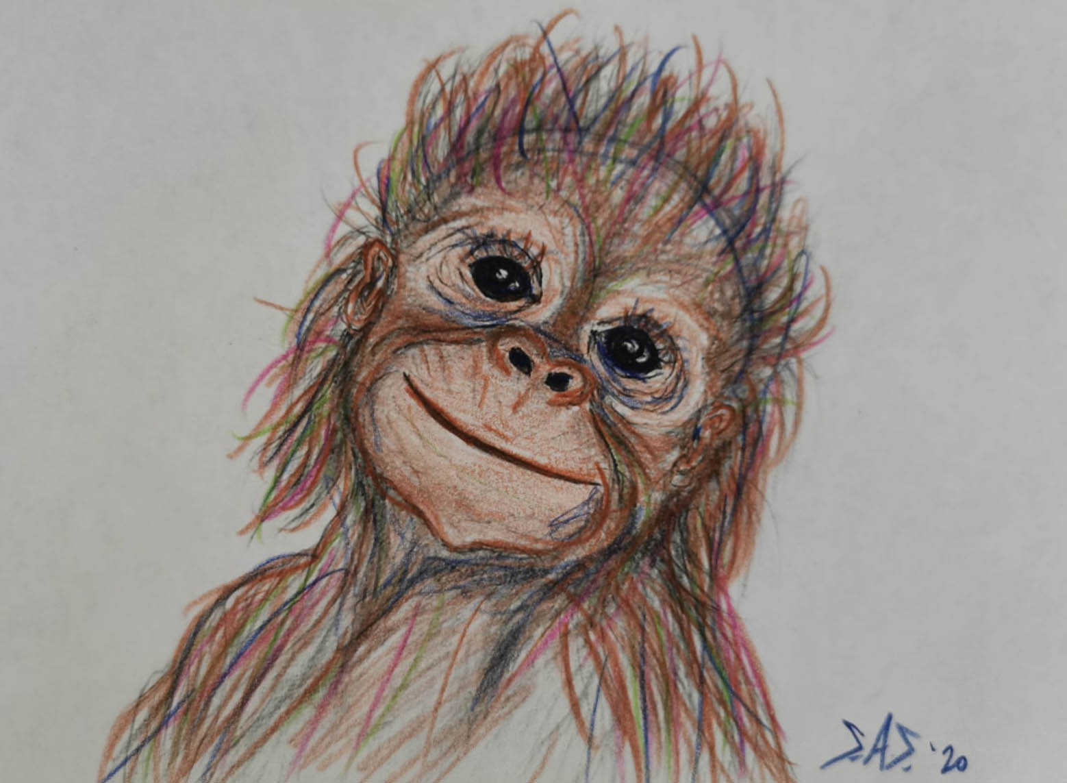 Baby orangutan in art pencil - Print