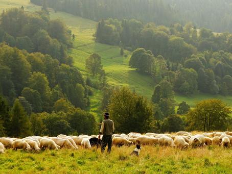 PSALM 23:  WHAT A SHEPHERD