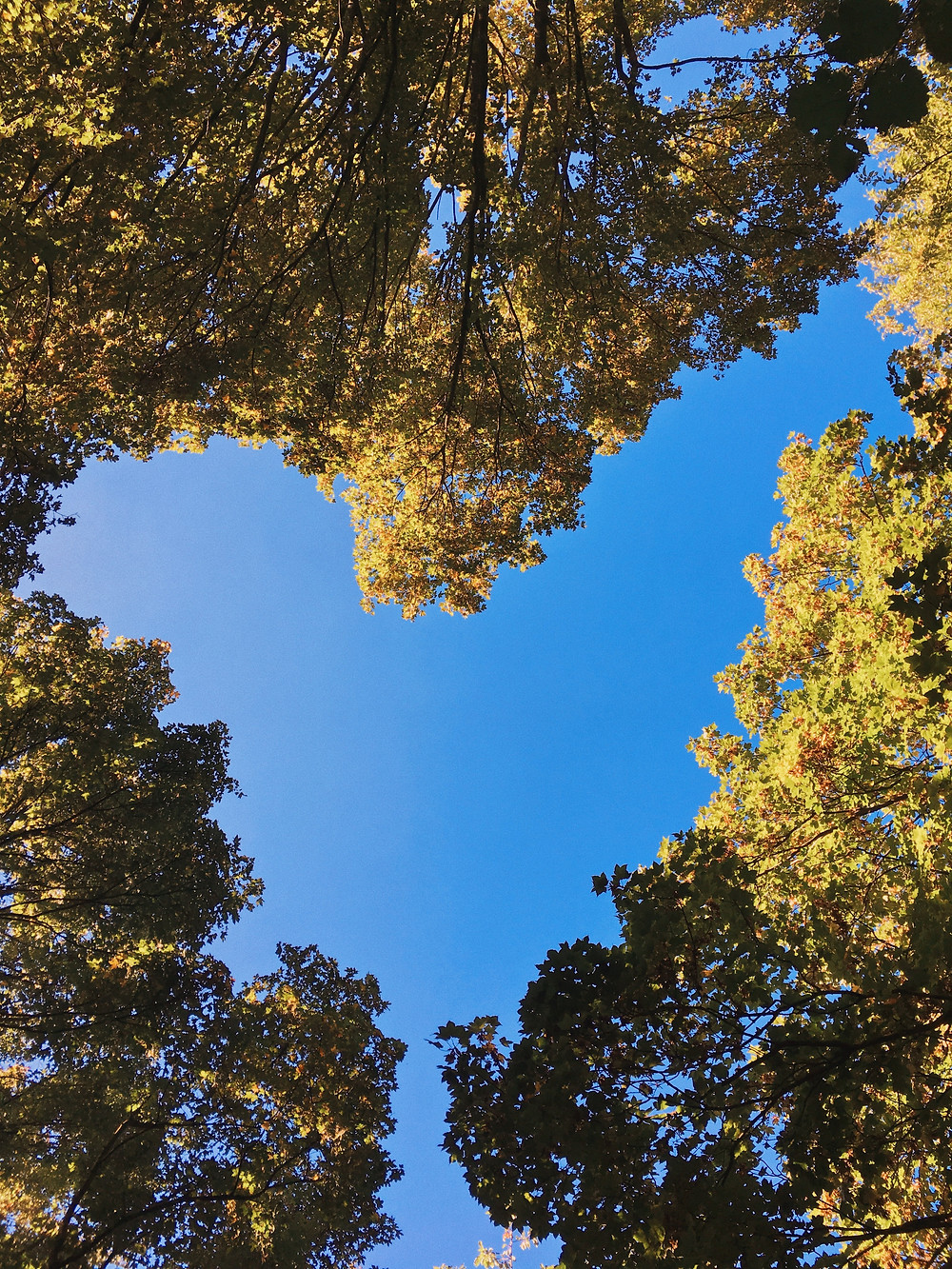An upward look at the opening between trees creating a heart image