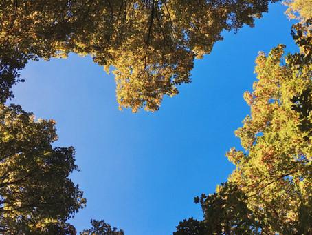 Meditation: Lovingkindness