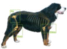 Thompson Animal Medical Center | Vet Clinic | Animal Hospital | Joint Pain | Senior Dog | Arthritis | La Crosse